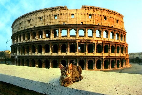 Cat near Colosseum, Rome