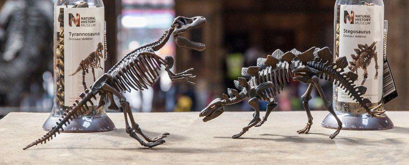 Skeletons of species of Dinosaurs