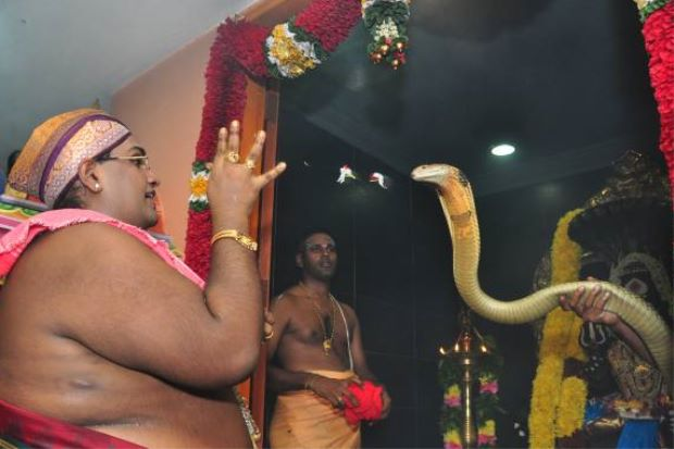Thinageswar performing prayers with the king cobra calmly going through the rituals