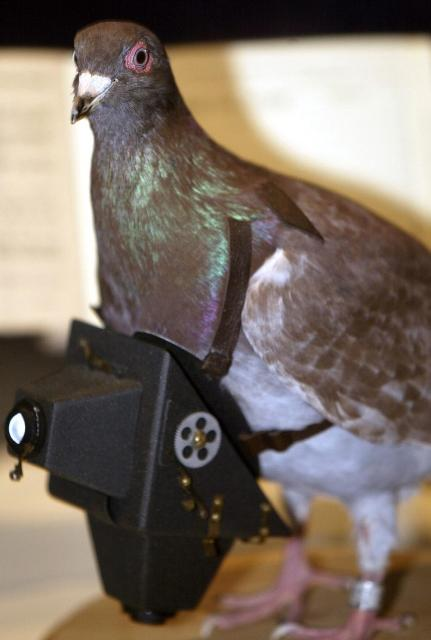 A replica cher ami, Spy pigeons who served their country during the World Wars