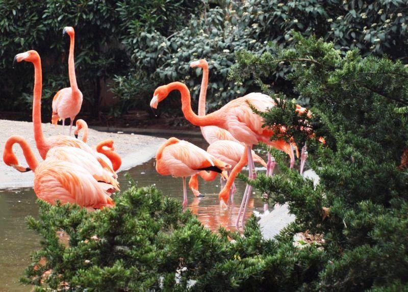 Smithsonian National Zoo Bird Center rebuild