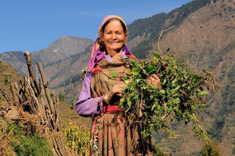 Himachal Pradesh People