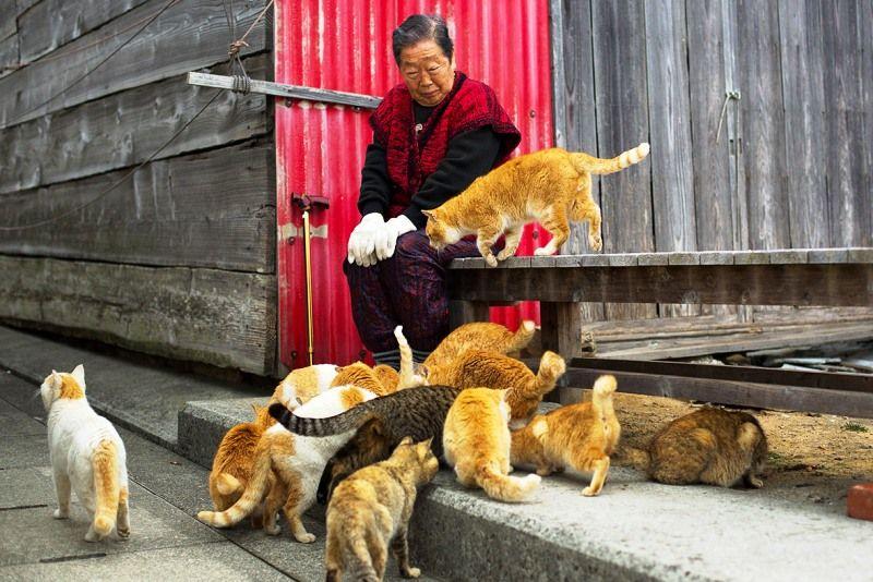 Japan Pets