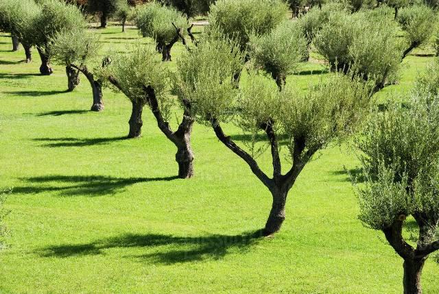 Olive Garden in Mendoza
