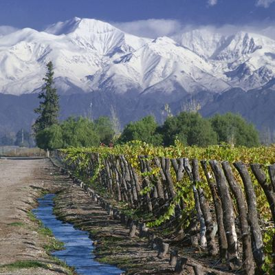 Small Irrigation Canals in Mendoza