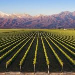 13 Interesting Facts About Mendoza