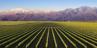 Vineyard of Mendoza image