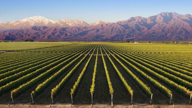 Vineyard of Mendoza image