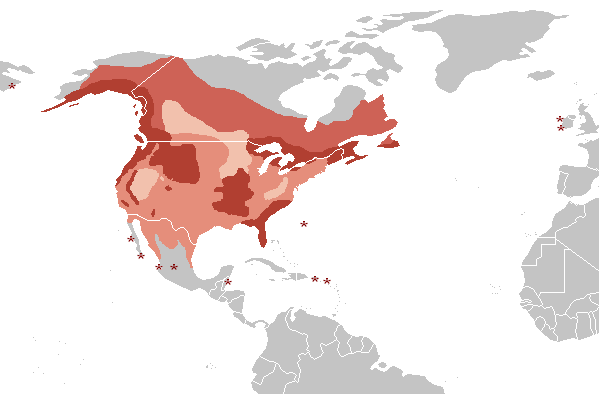 Distribution of the Bald Eagle