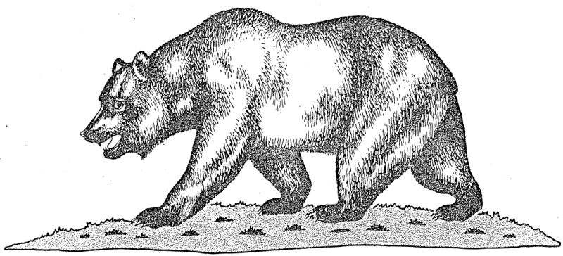 California Flag Official Bear Drawing