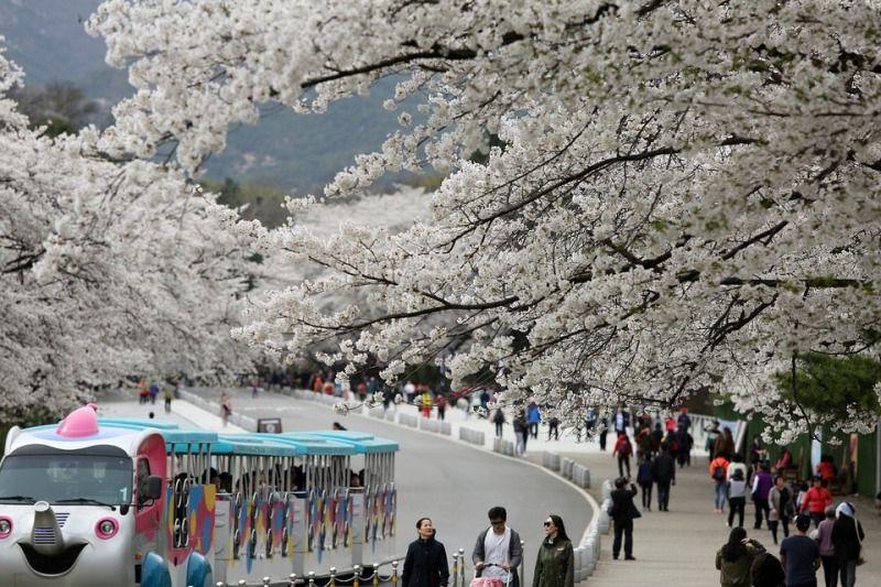 Seoul Tourism