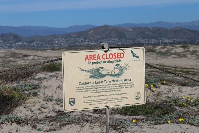Sign designating the area provides habitat for breeding California least terns, an endangered species