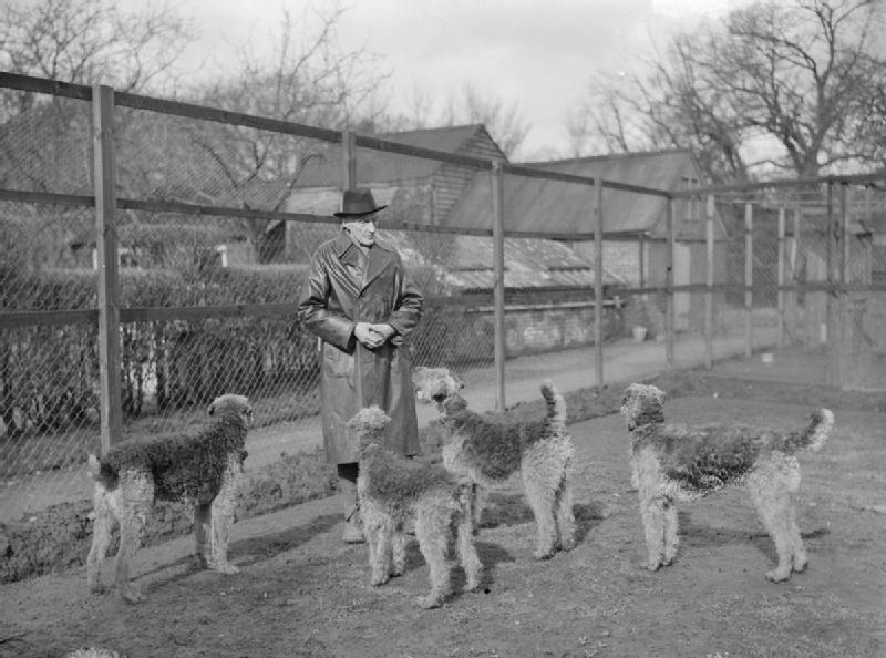 Poodles During World War II