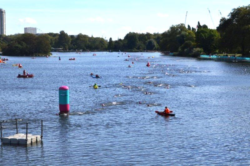 Swimmers In The Serpentine Lake