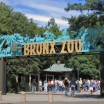 31 Interesting Facts About The Bronx Zoo