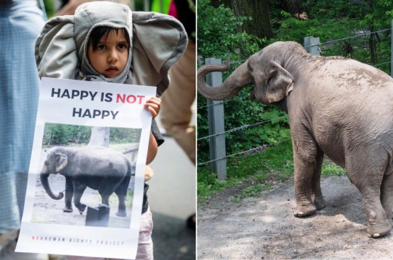 Bronx Zoo protesters demand the release of Happy the elephant